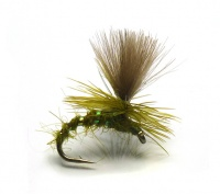 Olive CDC Emerger