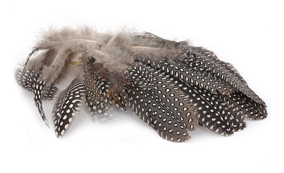 Guinea Fowl Feathers Flyonlyonline Co Uk
