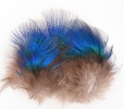 Peacock Blue Neck Hackles